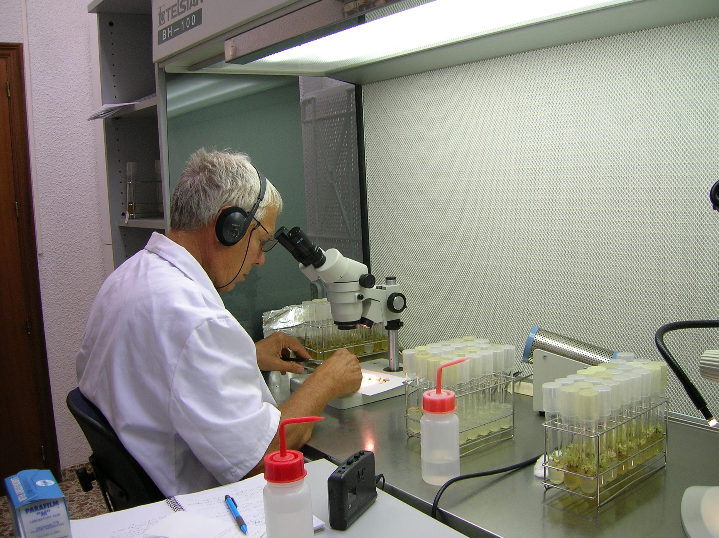 Culture in vitro