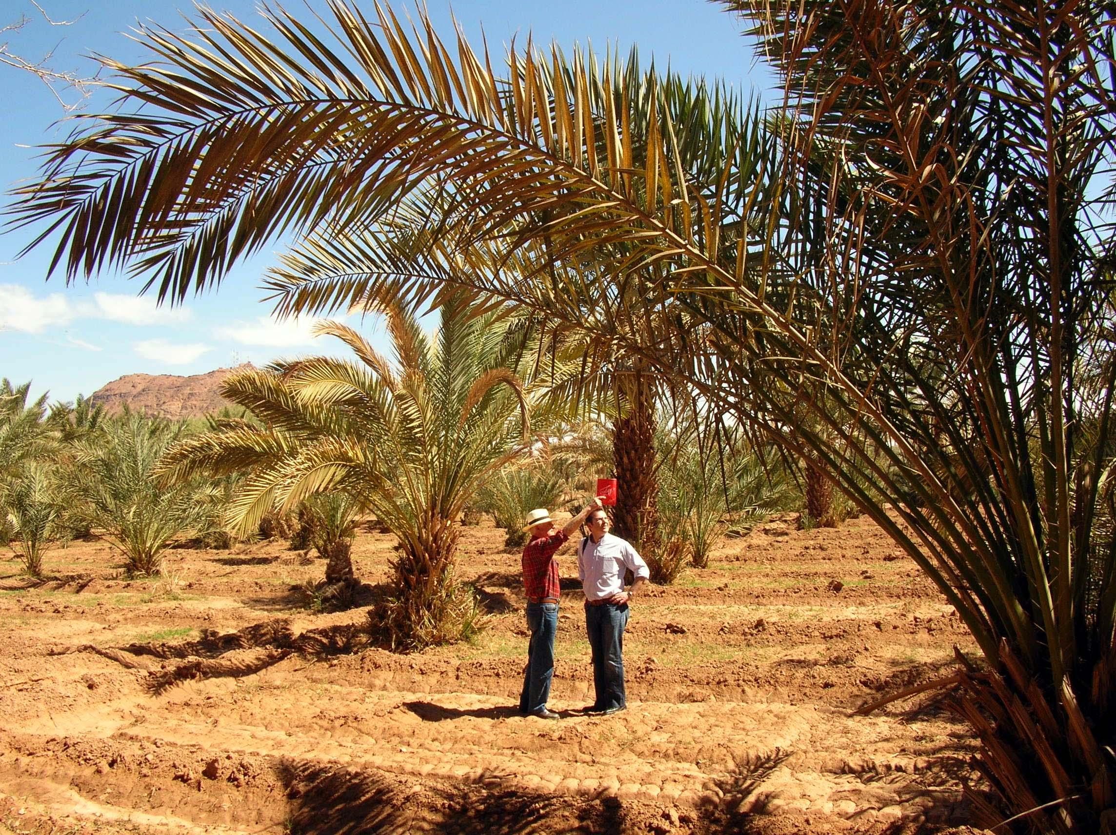 Agricultura de Oasis /Cooperación